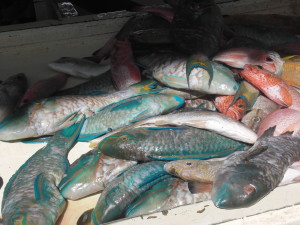 Fresh tropical catch at the market